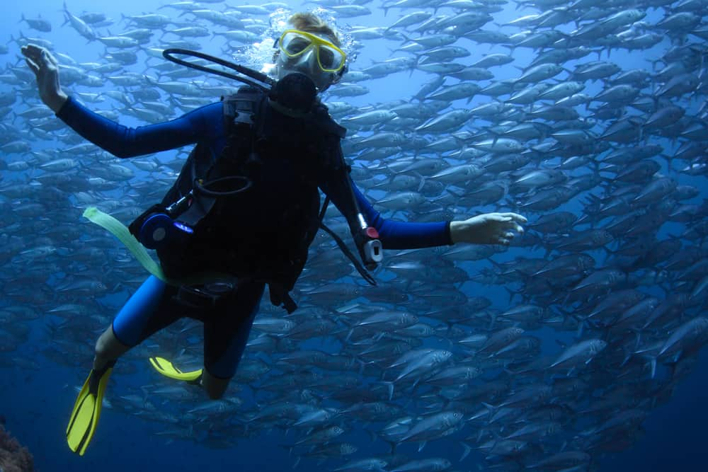 scuba diving in clear sea with school of jack fish